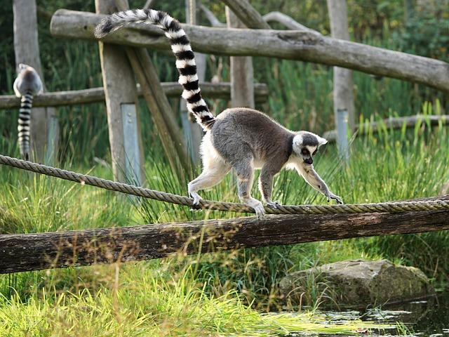location de voiture à Madagascar